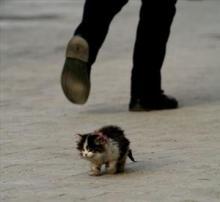 Don't abandon the kittens!